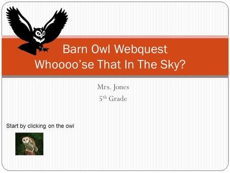 Barn Owl Webquest Whoooo'se That In The Sky?