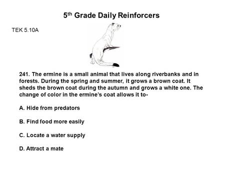 5 th Grade Daily Reinforcers TEK 5.10A 241. The ermine is a small animal that lives along riverbanks and in forests. During the spring and summer, it grows.