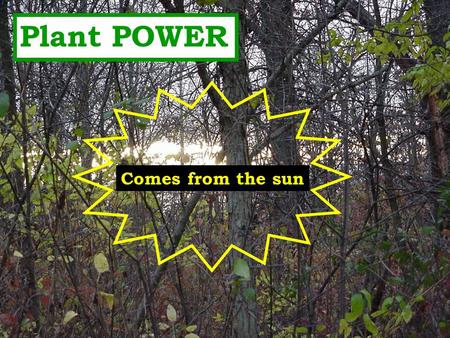 Plant POWER Comes from the sun THE FOOD FACTORY Leaves are the energy factories of the plant. Leaves use sunlight, carbon dioxide from air, and water.