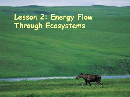"Lesson 2: Energy Flow Through Ecosystems. Physical Aspects in an Ecosystem  BIOTIC FACTORS  Bio means ""life""  Living organisms  Plants  Animals "