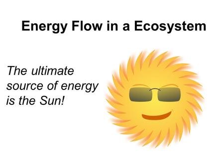 Energy Flow in a Ecosystem