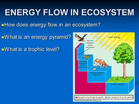 ENERGY FLOW IN ECOSYSTEM How does energy flow in an ecosystem? How does energy flow in an ecosystem? What is an energy pyramid? What is an energy pyramid?