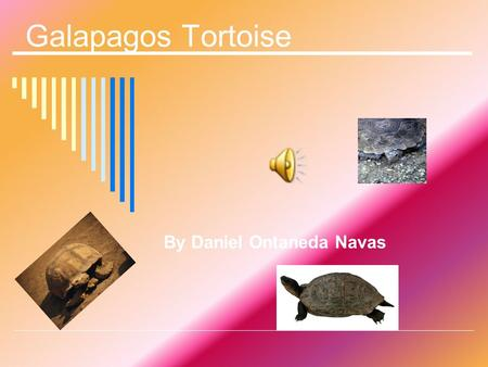 Galapagos Tortoise By Daniel Ontaneda Navas Introduction The Galapagos tortoise is the largest living reptile. Read more about the Galapagos tortoise.