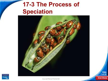 End Show Slide 1 of 33 Copyright Pearson Prentice Hall 16-3 The Process of Speciation 17-3 The Process of Speciation.
