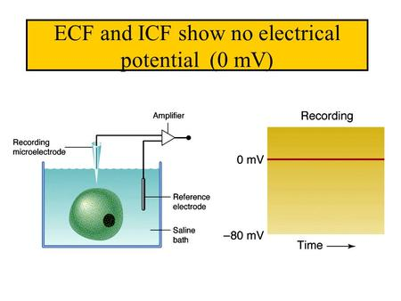 ECF and ICF show no electrical potential (0 mV).
