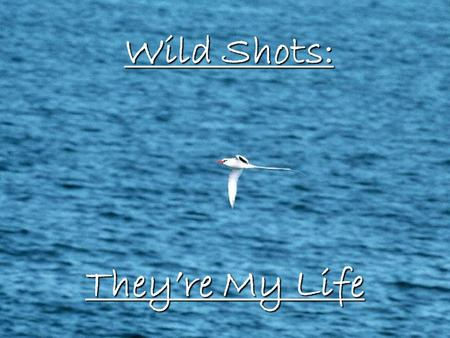 Wild Shots: They're My Life.