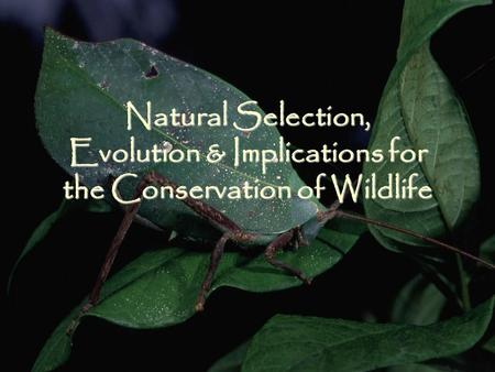 Natural Selection, Evolution & Implications for the Conservation of Wildlife.