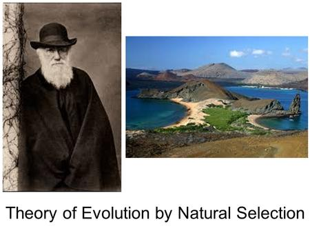 Theory of Evolution by Natural Selection Biblical Reference Through him all things were made; without him nothing was made that has been made. John 1:3.