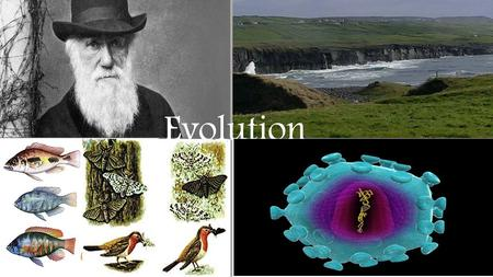 Evolution. Species- group of organisms that can interbreed and produce fertile offspring. Niche- role, or position, of an organism in its environment.