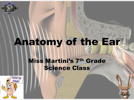 Anatomy of the Ear Miss Martini's 7 th Grade Science Class.
