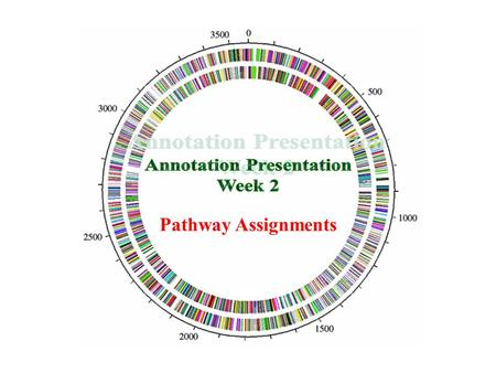 Pathway Assignments. The assignment – Annotating Pathways  KEGG Pathway Database.