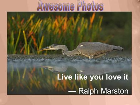 Live like you love it — Ralph Marston Even though it is unpleasant, you can do it if you must.