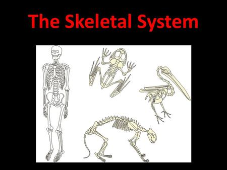 The Skeletal System. The Parts of the skeletal system are: Bones, Tendons, Ligaments, and Bone marrow.
