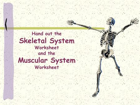 Hand out the Skeletal System Worksheet and the Muscular System Worksheet.