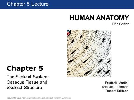 HUMAN ANATOMY Fifth Edition Chapter 1 Lecture Copyright © 2005 Pearson Education, Inc., publishing as Benjamin Cummings Chapter 5 Lecture Frederic Martini.