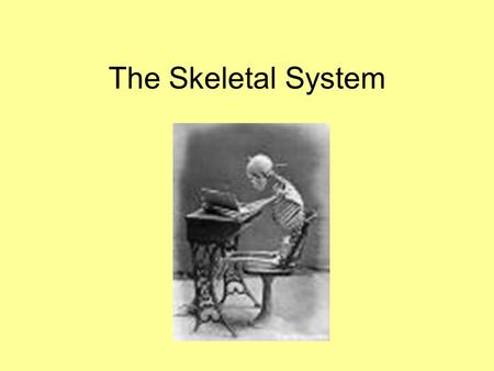 The Skeletal System. Outcomes By the end of the lesson, you will be able to: Know what the skeletal system is. Understand the functions of the skeletal.