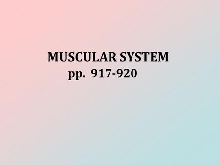 MUSCULAR SYSTEM pp. 917-920. FUNCTION Support, movement, and protection.