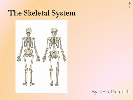 The Skeletal System By Tess Grimaldi. Function Provides support, movement, and protection Blood cell production Calcium storage Endocrine regulation.