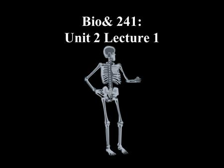 Bio& 241: Unit 2 Lecture 1. Functions of the Skeletal System 1.Support 2.Protection 3.Assistance in Movement 4.Mineral Homeostasis 5.Blood Cell Production.