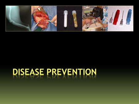 The Cornerstone of Disease Prevention is: Maintaining Good Animal Health.