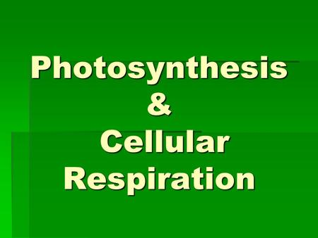 Photosynthesis & Cellular Respiration. Energy and Living Things Where does energy in food come from?  Directly or indirectly, almost all energy comes.