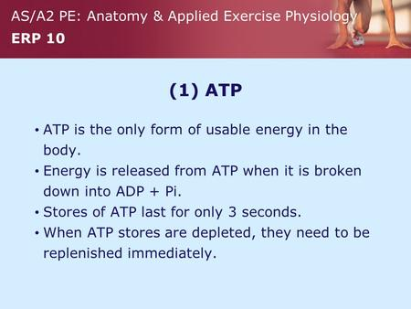 AS/A2 PE: Anatomy & Applied Exercise Physiology ERP 10 (1) ATP ATP is the only form of usable energy in the body. Energy is released from ATP when it is.