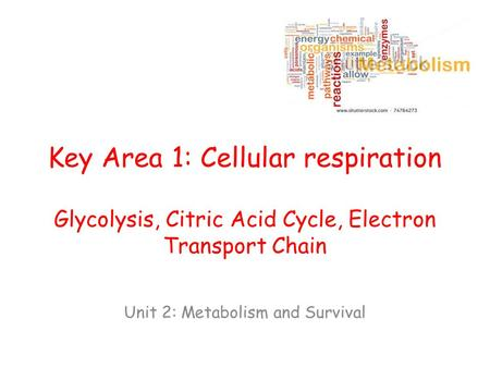 Key Area 1: Cellular respiration Glycolysis, Citric Acid Cycle, Electron Transport Chain Unit 2: Metabolism and Survival.