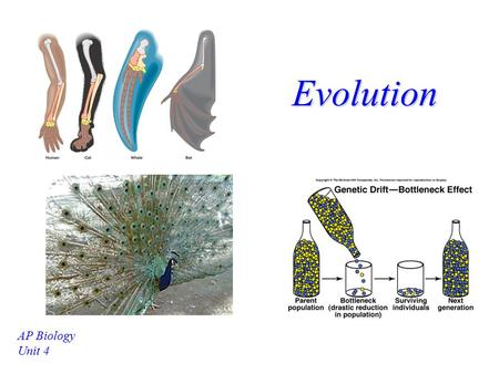 Evolution AP Biology Unit 4 History of Evolutionary Theory Linnaeus –Developed a system of classification based on body structures (morphology) Lamarck.