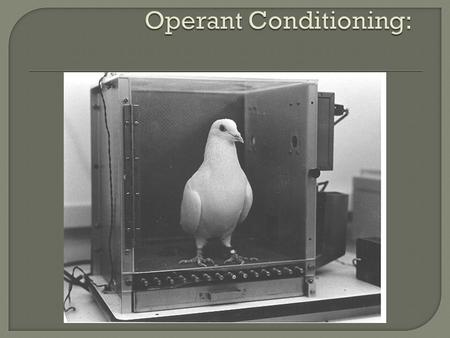 " Operant conditioning is simply learning from the consequences of your behavior the ""other side"" of the psychologist's tool box, operant conditioning."