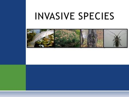 INVASIVE SPECIES. D EFINITIONS  NATIVE SPECIES Plants, animals, and other living things that have always lived in a certain area.