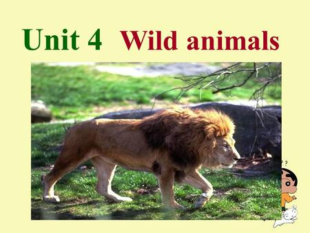 Unit 4 Wild animals. Vocabulary fox polar bear wolf insect n. 狐狸 北极熊 n. 狼 n. 昆虫 Words and expressions.