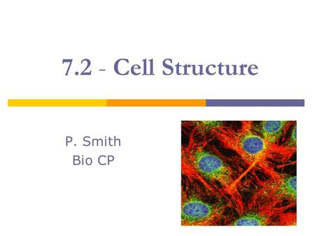 7.2 - Cell Structure P. Smith Bio CP. Cell Organization  Eukaryotic cells contain a nucleus and many specialized structures. Cytoplasm is the fluid portion.