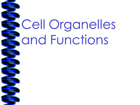 Cell Organelles and Functions. 08/11/09Free template from www.brainybetty.com 2 Prokaryotic – simple, single celled organisms that have NO (rhymes with.
