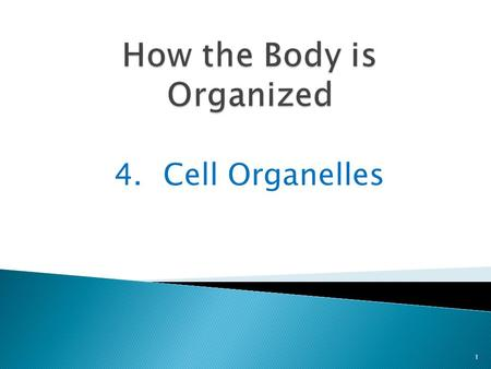 4.Cell Organelles 1. You explored the cell during the webquest 2 Now we will discuss a few of the more common cell organelles.