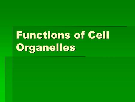 Functions of Cell Organelles.  Nucleus (A,P)  controls all cell activities  stores chromatin (DNA,chromosomes)  Nuclear Membrane (A,P)  allows substances.