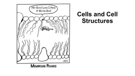 Cells and Cell Structures. Quiz!!!!! 1.What are the three parts of the cell theory? 2.What are three similarities and 3 differences between prokaryotic.