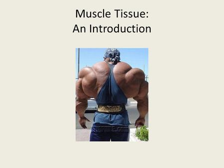 Muscle Tissue: An Introduction. Muscles make up close to half of the body mass and are unique in transforming chemical energy (ATP) into mechanical energy.