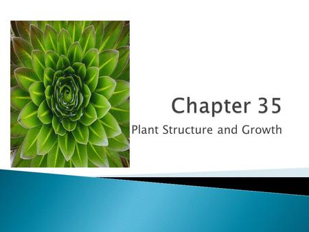 Plant Structure and Growth.  Roots anchor the plant in the soil, absorb minerals and water, and store food  Monocots have a fibrous root consisting.