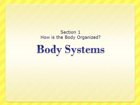 Section 1 How is the Body Organized?. Objective  You will know that the human body is composed of subsystems.