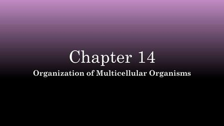 Chapter 14Chapter 14 Organization of Multicellular OrganismsOrganization of Multicellular Organisms.