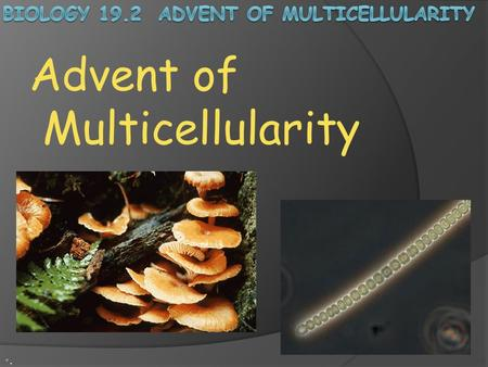 Biology 19.2 Advent of Multicellularity