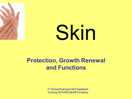 © Clinical Science & Skill Applied to Nursing /SONMS/Cardiff University Skin Protection, Growth Renewal and Functions.