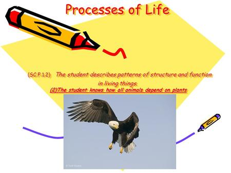 Processes of Life (SC.F.1.2) The student describes patterns of structure and function in living things. (2)The student knows how all animals depend.
