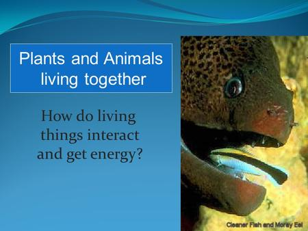 How do living things interact and get energy? Plants and Animals living together.