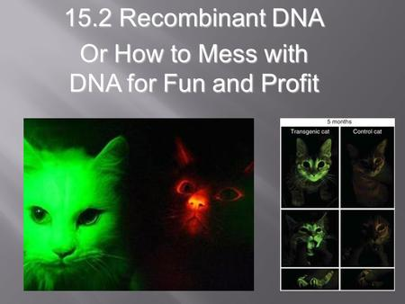 15.2 Recombinant DNA Or How to Mess with DNA for Fun and Profit.