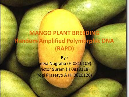 MANGO PLANT BREEDING Random Amplified Polymorphic DNA (RAPD)