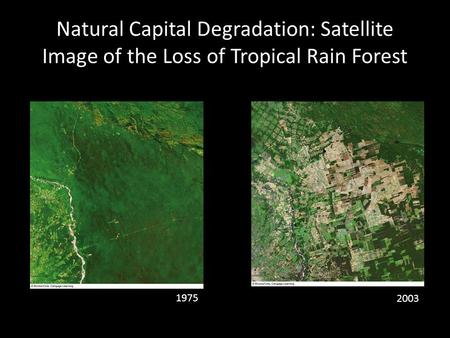 Natural Capital Degradation: Satellite Image of the Loss of Tropical Rain Forest 1975 2003.