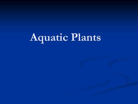 Aquatic Plants. I. Adaptations A. Aquatic and wetland plants do not belong to any one particular plant family. B. Individuals plants within families have.
