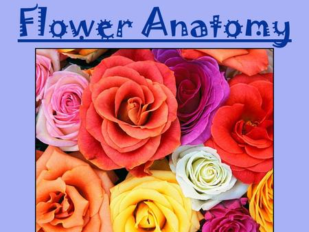 "Flower Anatomy. ""You may think of flowers as decorative objects that brighten the world, but the presence of so many flowers in the world is visible evidence."
