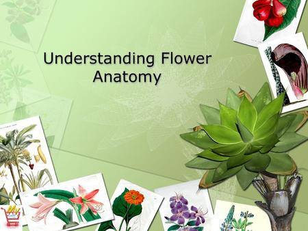 Understanding Flower Anatomy. What are the parts of a flower? What is the purpose of a flower? What are some different types of flowers? How is a monocot.